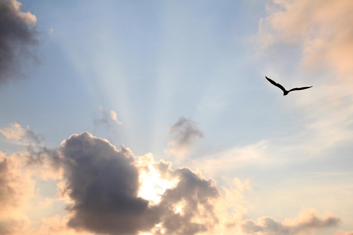 Oiseau Ciel