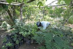 Un volontaire travaille dans une serre dédiée à la culture des plantes qui entoureront la maison d'adoration.