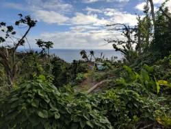 Le territoire kalinago, en Dominique, où la communauté s'est rassemblée pour construire des serres dans lesquelles les semis peuvent germer pour aider à remettre en état les champs qui ont été détruits par l'ouragan.