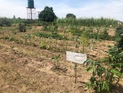 Le centre Ngungu pour l'agriculture communautaire comprend de petites parcelles de terrain sur lesquelles il sera possible d'apprendre l'application de systèmes durables de production alimentaire.