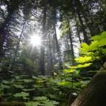 trees_0