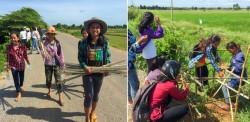 Photographie prise avant la crise sanitaire actuelle. En 2019, un groupe de jeunes adolescents du village cambodgien d'Okcheay a entrepris de planter des arbres le long d'une portion de route pour améliorer la qualité de l'air et abriter de la chaleur.