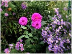 Les Fêtes du Riḍván se déroulent au printemps quand la nature refleurit et nous offre ses merveilles.