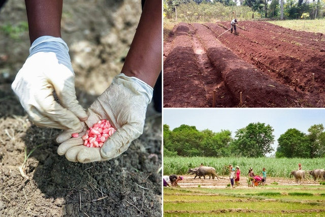 Images d'initiatives agricoles de la communauté bahá'íe en Colombie, en Ouganda et au Népal (dans le sens des aiguilles d'une montre à partir de la gauche) pour renforcer l'agriculture locale.